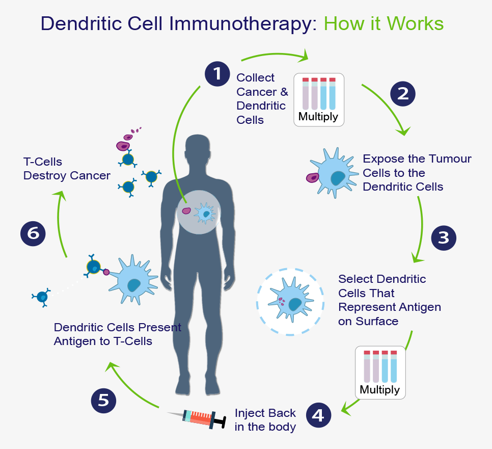 Dendritic Cell Immunotherapy: How it Works